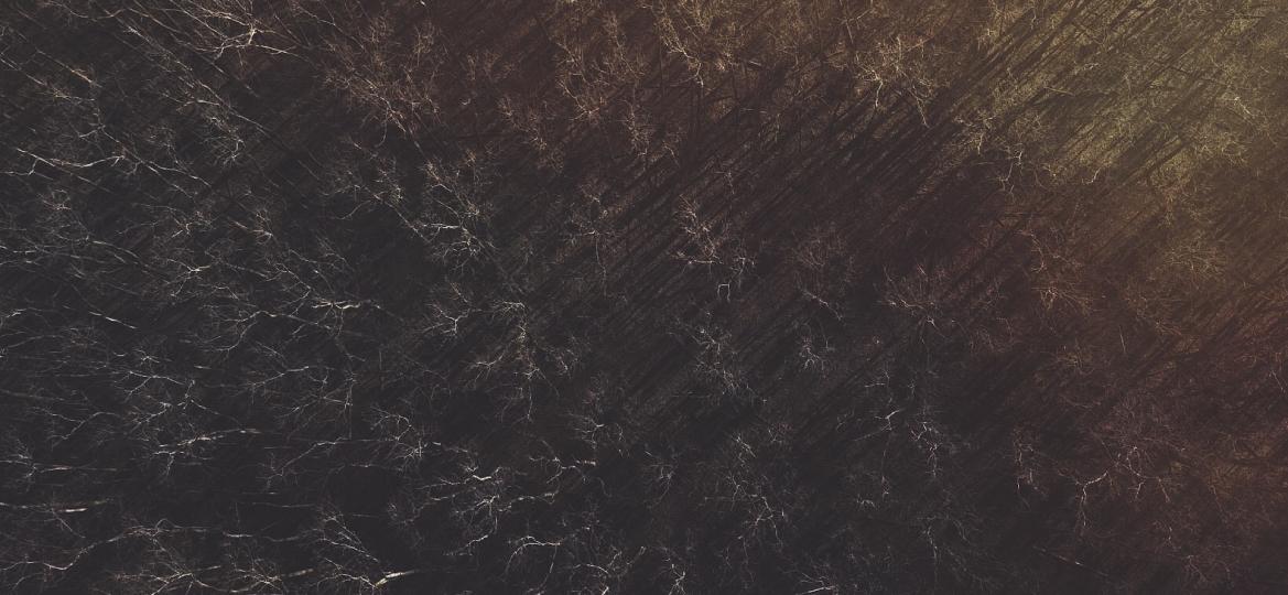 """""""Twilight Grove"""" – Photo Of TheDay"""