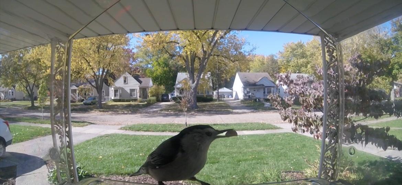 Bird Chalet – Bird Feeder Highlights –10.28.2020